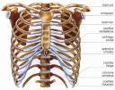 huesos-del-torax.jpg