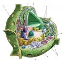 estructura-de-la-celula.png