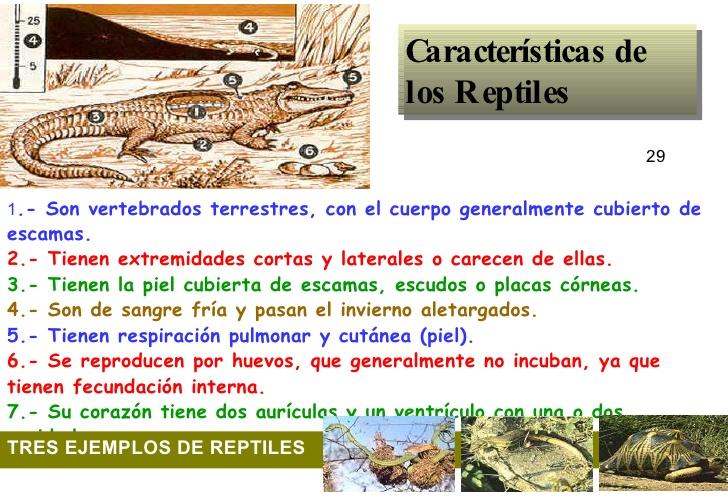 Características de los reptiles- parte 2