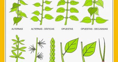 Clasificación de las hojas – Parte 2
