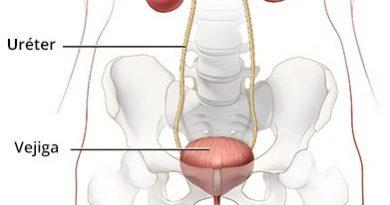 El aparato urinario-2